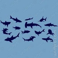 T-shirt Shark Species